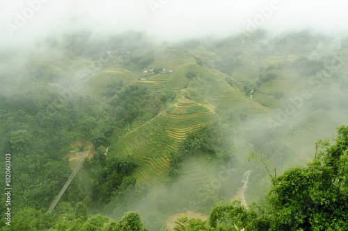 Fotobehang Olijf scenery with rice fields in terraces under the rain and the fog in the Sapa vale in Vietnam.