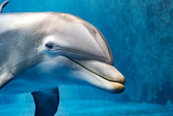 dolphin underwater looking at you - 182068323