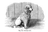Illustration of purebred dogs.