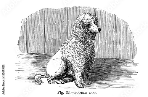 Illustration of purebred dogs.