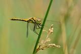 dragonfly - 182081316
