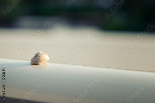 Small sea shell. Poster