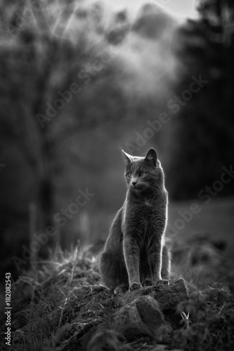 czarno-bialy-kot