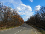 Road through the autumn forest on a nice day.