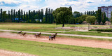 horse racing of galloping horses legs on hippodrome track