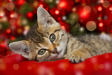Weihnachtskätzchen - 182093139