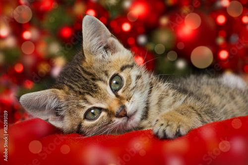 Fotobehang Kat Weihnachtskätzchen