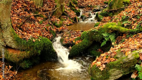 Water flowing in a small creek through a forest © Sjo