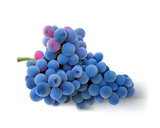 Grapes. Hand drawn vector illustration of a big bunch of grapes.Detailed realistic image on white  background.  - 182096132