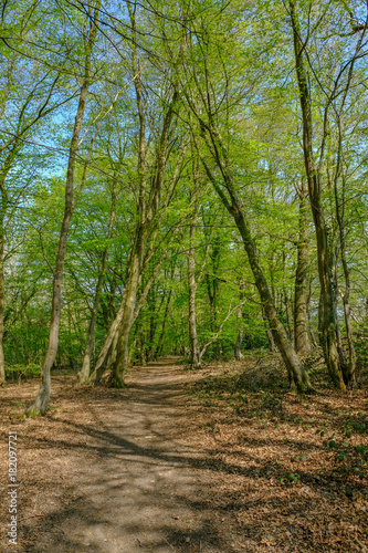 Track in the woods of the Essex countryside in springtime. Poster