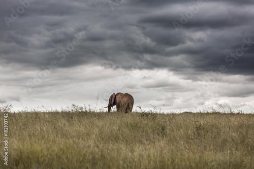 Keuken foto achterwand Gras Elephant Alone