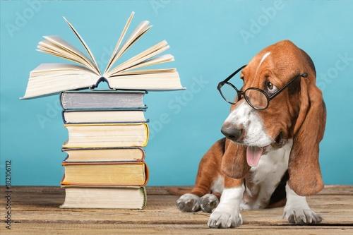 Dog. Poster