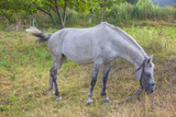 white domestic mare - 182107362