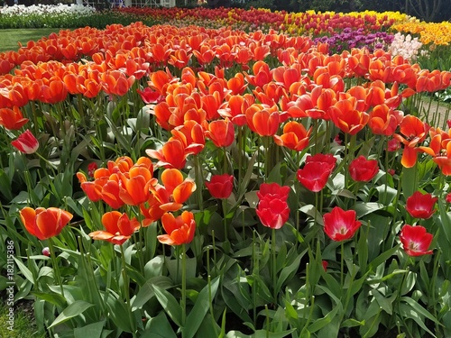 Aluminium Tulpen red tulips