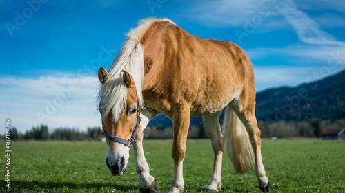 Aluminium Equine On Trimming Of Grass