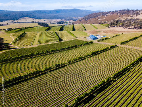 Staande foto Wijngaard An aerial view of a vineyard at a winery