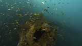Establishing coral reefs that grew on a part of a sunken ship. A diver eventually was seen on the shot. - 182125934
