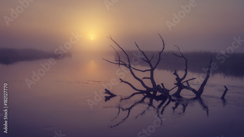 Poster Ochtendgloren Landscape of river on morning misty sunrise. Old dry tree in water in early foggy dawn. Scenic river