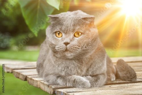 Fotobehang Kat Cat.