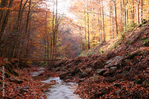 Foto op Plexiglas Diepbruine Bridge through the creek in the autumn forest.