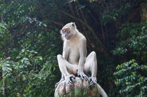 Deurstickers Kuala Lumpur Monkey in Batu Caves Selangor Malaysia