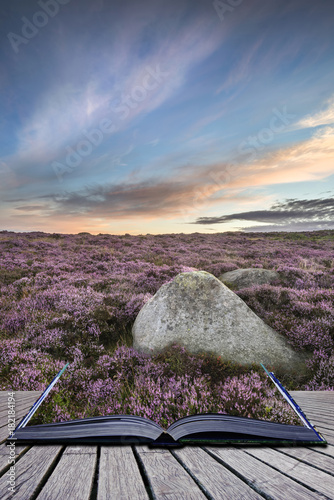 Tuinposter Cappuccino Stunning dawn sunrise landscape image of heather on Higger Tor in Summer in Peak District England