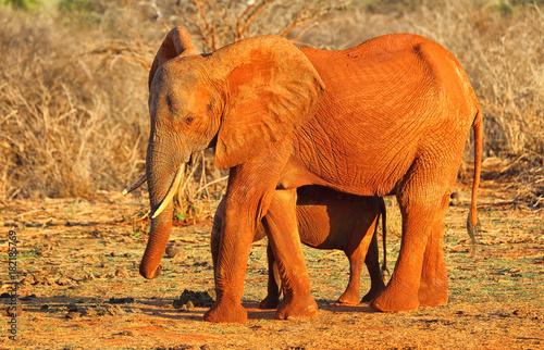 Elefantenmutter mit Kind Poster