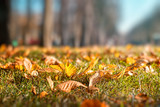 Autumn landscape. A sunny day in the park. Yellow leaves on the ground. Selective focus. - 182191108