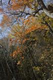 Les feuilles mortes - 182193189