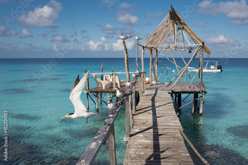 Foto op Canvas Tropical strand birds pier on the fakarava lagoon