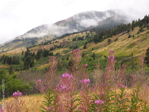 Fotobehang Canada Focus Stacked image of Fire Weed and Mountain Background