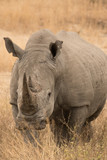 White Rhino - 182206512