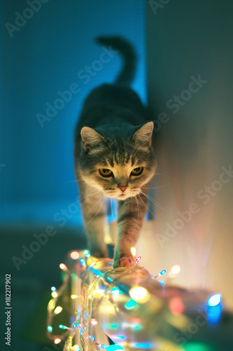 Fotobehang Kat Cat and Christmas lights