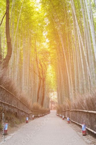 Plexiglas Bamboe Bamboo forest with walking way tropical forest, natural landscape background