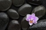Light pink  orchid  lying on wet black stones. Viewed from above. Spa concept. - 182227335