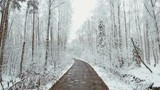 go on the road between snow-covered trees in winter forest - 182227766