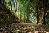 Shady alley in the bamboo grove. Batumi Botanical Garden - 182228791
