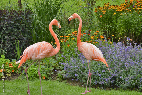 Colourful Flamingos by a flower border Poster