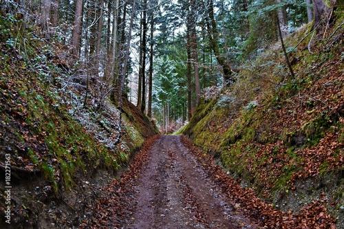 Fotobehang Weg in bos Weg im Wald
