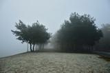 Jesienna piaszczysta droga przy lesie nad jeziorem. - 182278132