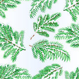 Seamless texture Spruce branches lush conifer winter snowy natural background vector illustration editable hand draw - 182282717