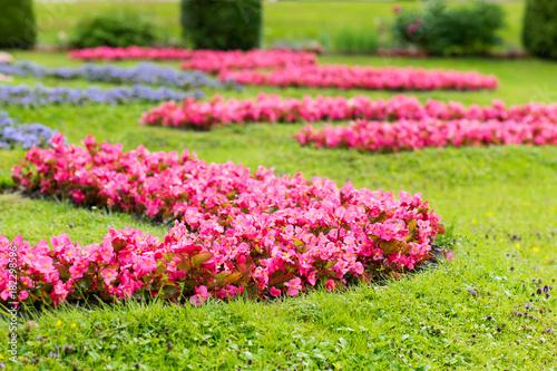 Aluminium Candy roze Lawn in Landscape Park