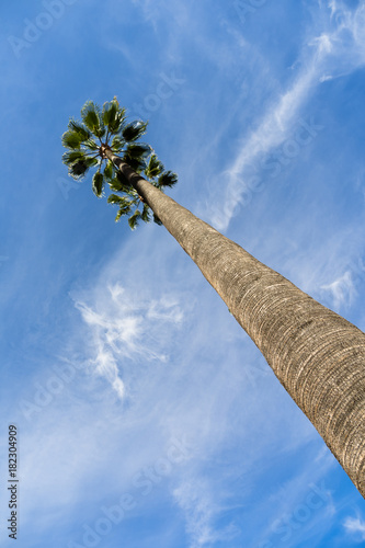 Tall Palm Tree Blue Sky Los Angeles Poster
