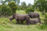 White Rhinoceros - 182308143