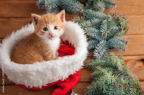 Fototapeta ginger kitten in santa hat against the background of a Christmas tree