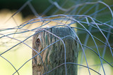 strange folds in the fencing and shallow focus create this semi-abstract of farm fencing being installed - 182314746