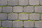 Gray paving slabs with a green moss - 182316781