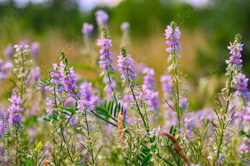 Aluminium Lavendel Wild Flowers