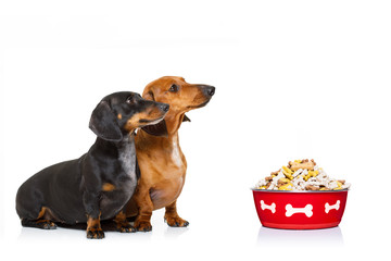 healthy dogs with food bowl and owner