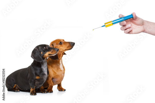 Staande foto Crazy dog ill sick dogs with illness and vaccine syringe